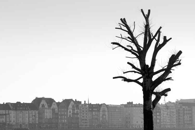 Düsseldorf, Germany Architecture Baum Blackandwhite Clear Sky Day Düsseldorf ELA Germany Growth Nature No People NRW Outdoors Schwarzweiß Tree TakeoverContrast Monochrome Photography