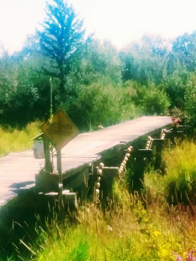 Slough Walking In The Woods River Collection, Bridge - Man Made Structure Bridge To Nowhere .for My Friend Who Loves Bridges Like I Do,