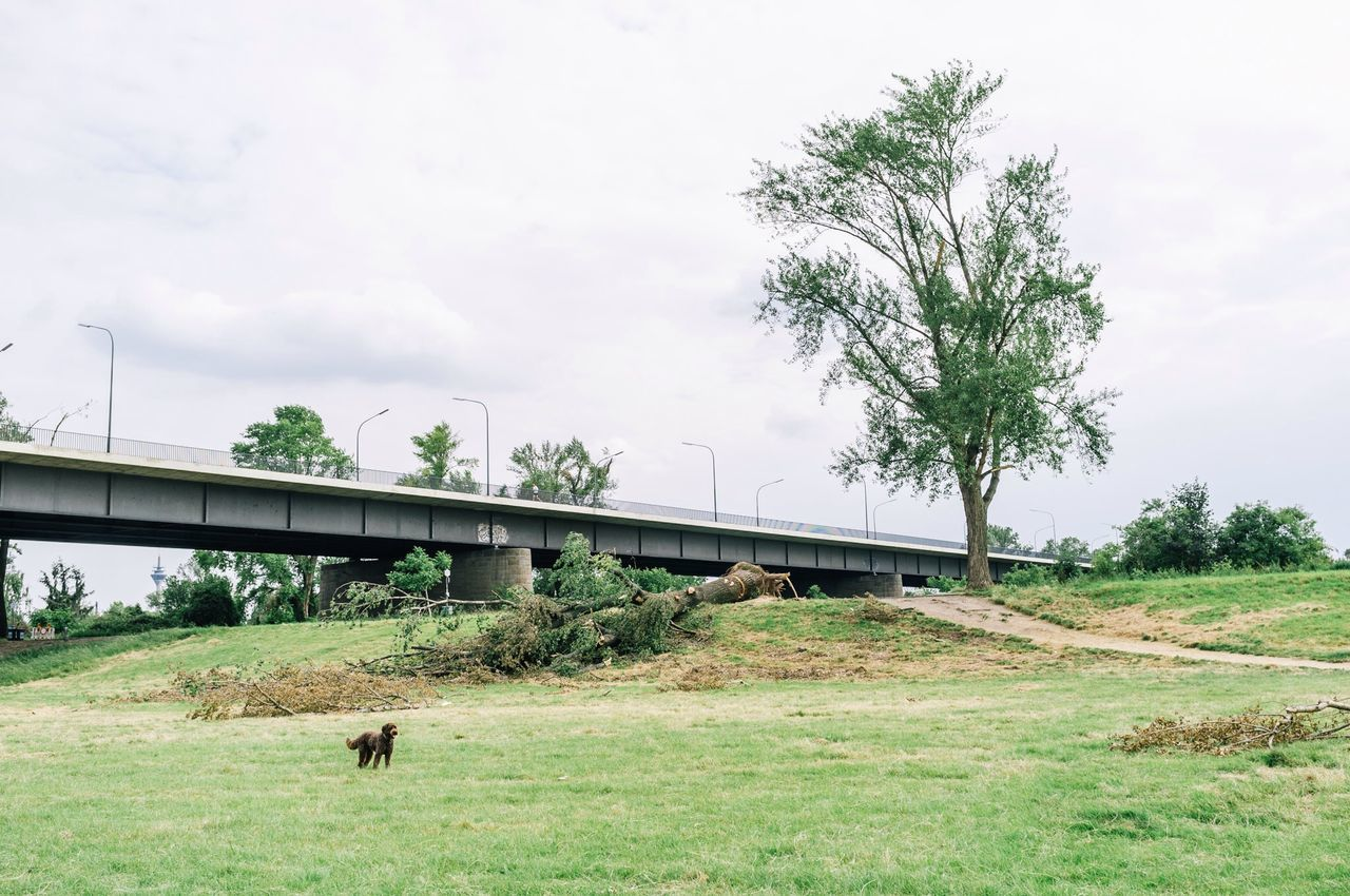 Bridge over grassy field against cloudy sky