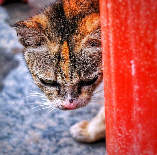 Cat Animals Cat Pet Close-up Domestic Animals