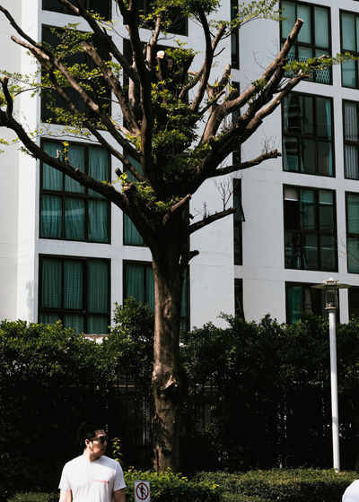Rear view of people on tree against building