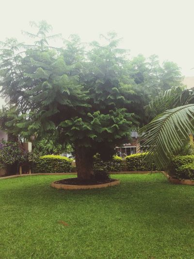 That tree's on my grandmother's house, but she sold the house and the tree will be cut ): Im soo sad about this ?