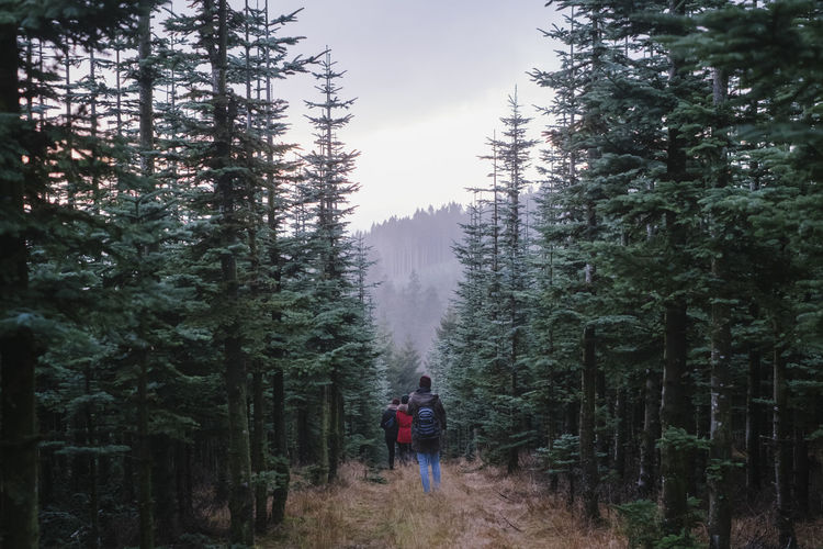 Rear view of people walking amidst trees in forest against sky