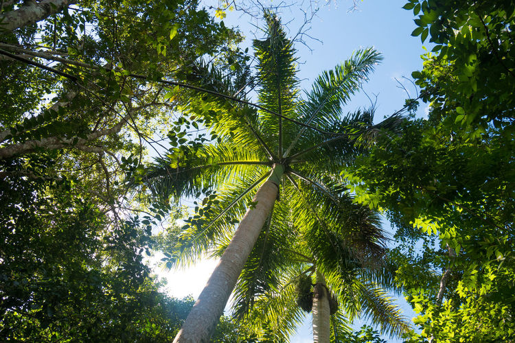 Palm Tree Topes De Collantes Beauty In Nature Branch Day Forest Forest Photography Green Color Growth Jungle Leaf Low Angle View Nature No People Outdoors Rain Forest Sky Tree