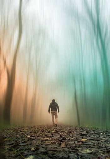Rear View Of Man Walking On Dry Leaves Covered Field In Forest
