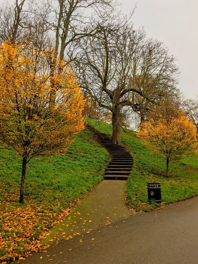 Gateway Path Pathway Stairs Stairway Plant Tree Growth No People Day Nature Sky Beauty In Nature Outdoors Footpath Tranquility The Way Forward Direction Tranquil Scene Landscape