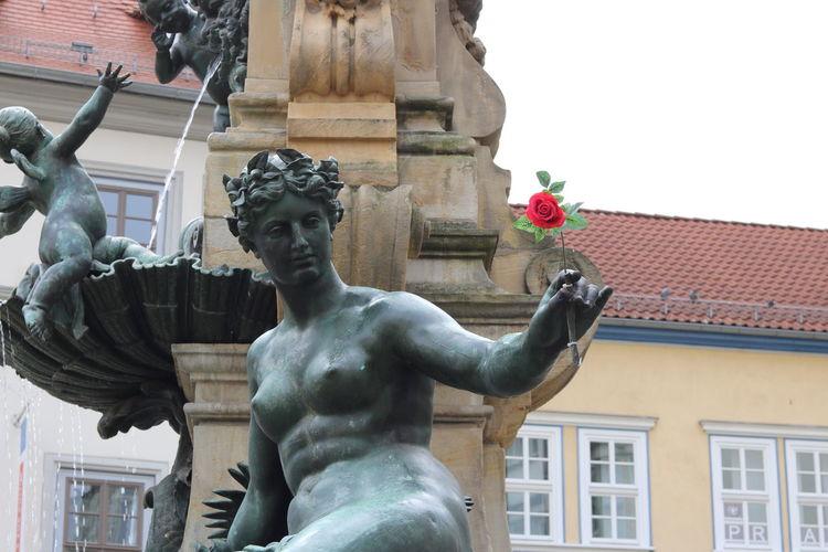 Erfurt Rose -