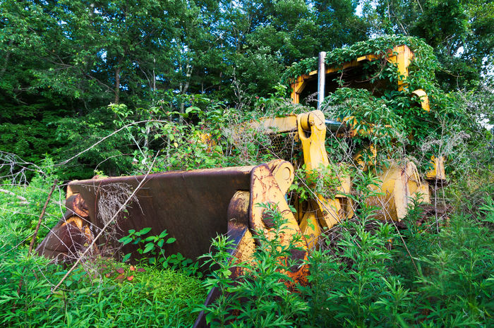 Sometimes Nature Wins. Bulldozer Covered in Plants and Weeds. Abandoned Bulldozer Day Front Loader Grass Nature No People Old Old Abandoned Overgrown Plant Tree Weekend