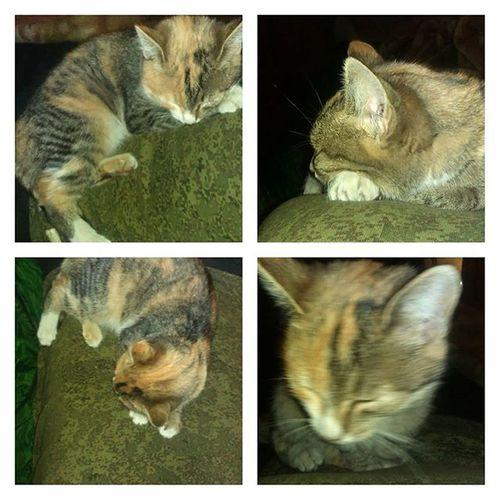 Опять эта наглая кошка оккупировала меня котэ котополченец ополчение новороссия лнр днр мяумяу
