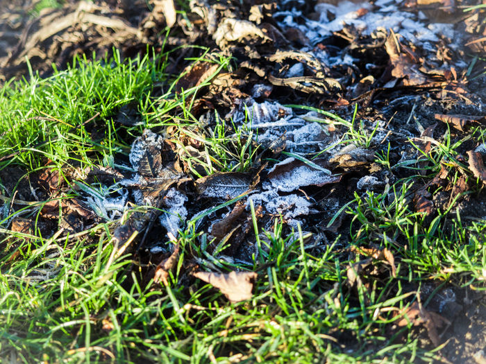 Close-up Day Field Freshness Frost Grass Green Color Growth Icy Natural Nature No People Outdoors