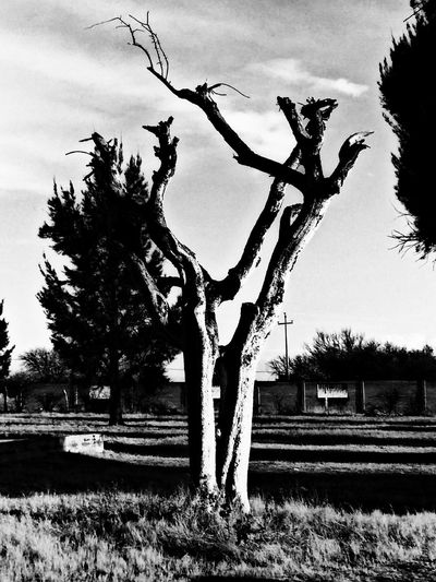 Blak And White Nature Tree No People Day Sky