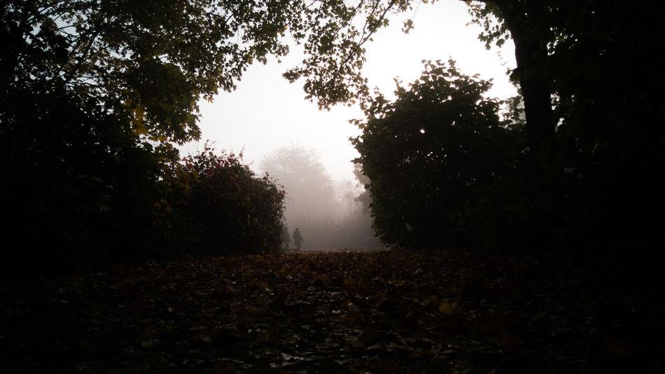 following the dark path Path Dark Walkway Early Morning Morning Light Morning Landscape_photography Landscape_lover Landscape_captures Landscapephotography Honor 10 United Kingdom Tree Water Fog Sky Landscape