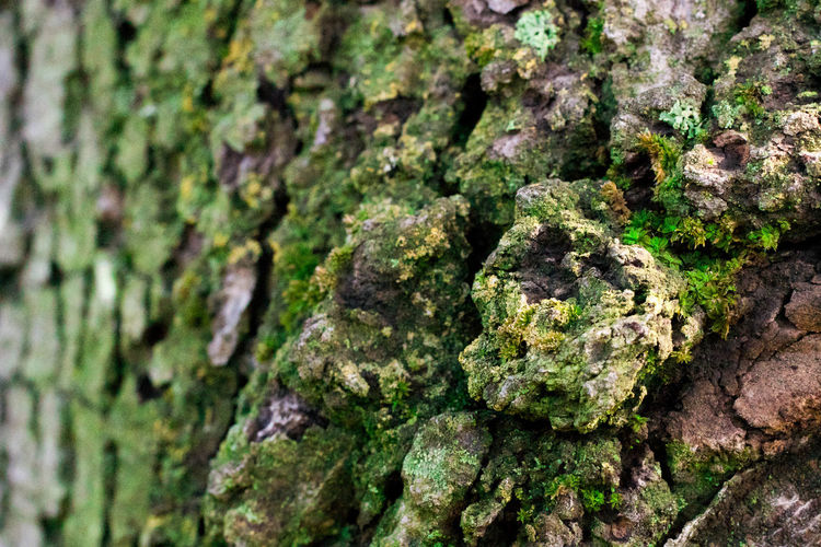 Bark Macro Photography Moss & Lichen Musk Backgrounds Bark Close-up Day Full Frame Green Color Growth Lichen Macro Macro_collection Moss Nature No People Outdoor Photography Outdoors Pattern Rough Textured  Tree Tree Trunk