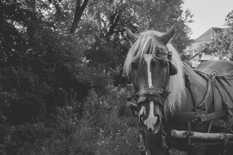 Portrait of horse standing against trees