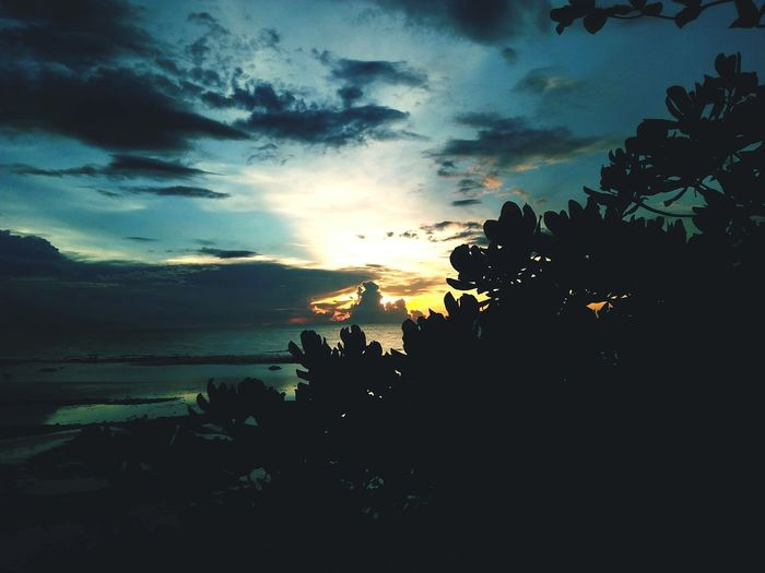 Tree Sea Sunset Water Palm Tree Silhouette Multi Colored Sky Landscape Cloud - Sky