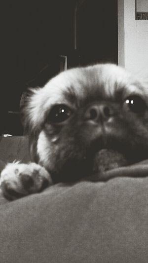 look at those eyes! Puppy Love B&w Hi!