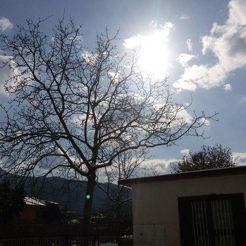 A new year 2015 2015  Capodanno NewYear Sun Winter Augurio Cold Snowy Sky Blu Foggy Life Tree Home Sweethome Sweet Instancool Instagram Goon Semprecosí Mustgoon Wind Mountain