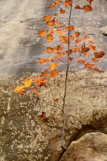 Nature Change Autumn No People Day Outdoors Plant Part Leaf Rock Plant Rock - Object Water Solid Close-up Orange Color High Angle View Beauty In Nature Tree Growth Maple Leaf Leaves Cloudland Canyon