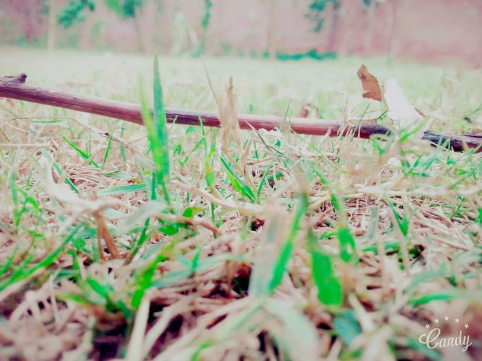 Green + dry grass. Growth Nature Beauty In Nature