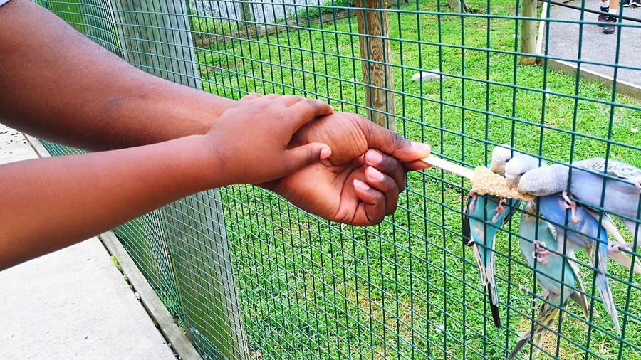 Cropped hands of father and son feeding budgerigars at natural bridge zoo