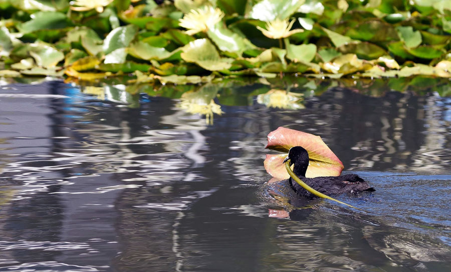 Bird life wildlife water Nature Lake Beauty In Nature Plant Floating On Water Animal Themes Outdoors Water Taking Photos Enjoying Life Relaxing