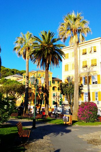 Palm Tree Blue Tree Clear Sky Sunlight Outdoors City Building Exterior Day Architecture No People Sky Enjoy The New Normal People Beauty In Nature Liguria Italy Seaside Liguria,Italy Liguria - Riviera Di Ponente Liguriansea Ligurian Coast. LiguriaMonAmour Liguriaterraleggiadra Like4like