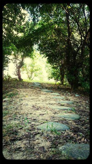 很惊喜的发现在楼后面的小道尽头还有一池荷花,真是惊艳了我的夏天。 First Eyeem Photo