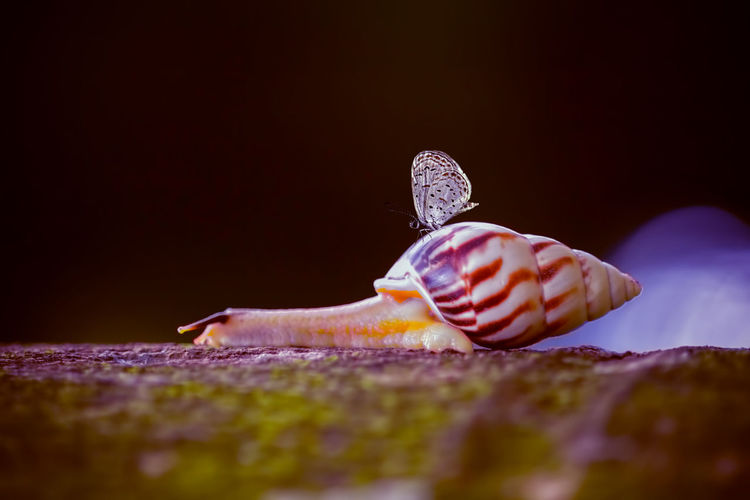 snails and butterflies Selective Focus Close-up No People Animal Wildlife Animals In The Wild Animal Food One Animal Food And Drink Indoors  Invertebrate Shell Nature Animal Themes Studio Shot Copy Space Beauty In Nature Rock Solid