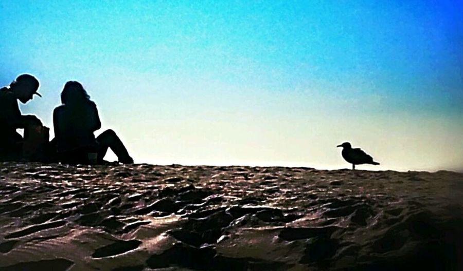 i love to watch lovers more than love life. Bird Venice Beach Love Enjoying The Sun
