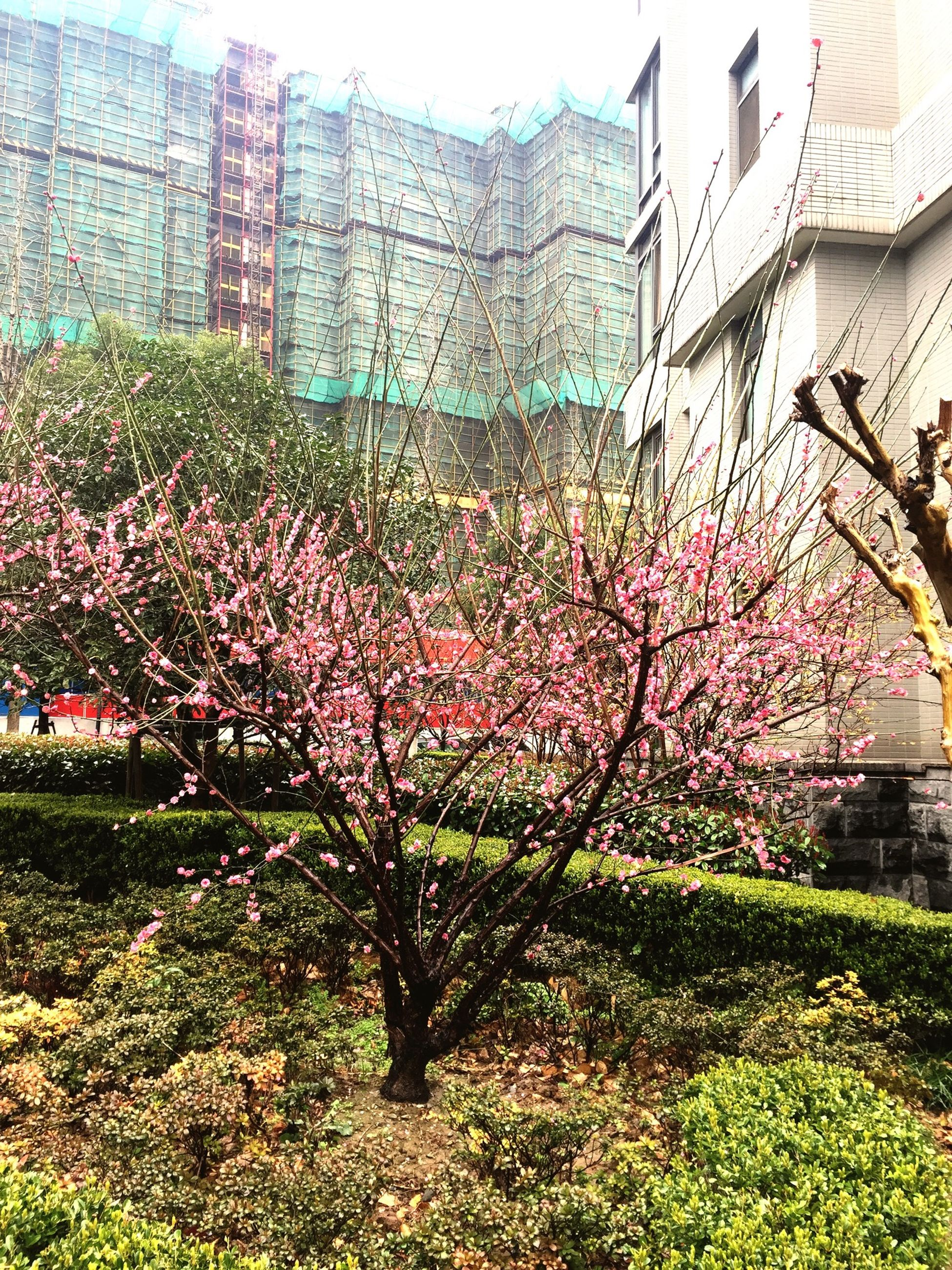 building exterior, architecture, built structure, flower, tree, growth, plant, freshness, city, nature, branch, lawn, grass, day, park - man made space, house, building, outdoors, blossom, beauty in nature