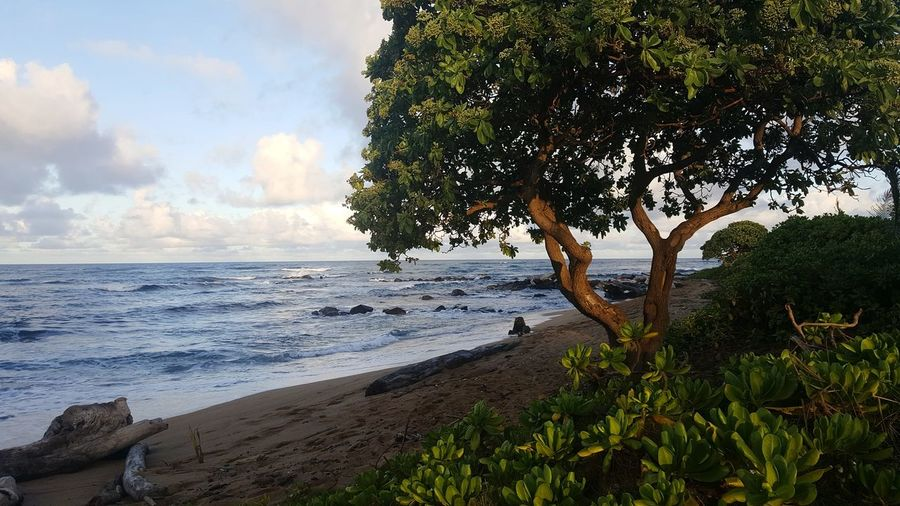 Tree Water Beach Nature Sea Outdoors No People Cloud - Sky Day Beauty In Nature Scenics Tranquility Sky Horizon Over Water Growth Wave Backgrounds Landscape Travel Destinations Postcard Picture