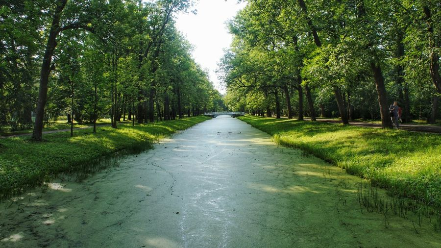 plant's canal Overgrown Ducks Weedy Canal Bridge Saint Petersburg Park Tree Water Diminishing Perspective Sky Landscape Green Color Grass Blooming Treelined