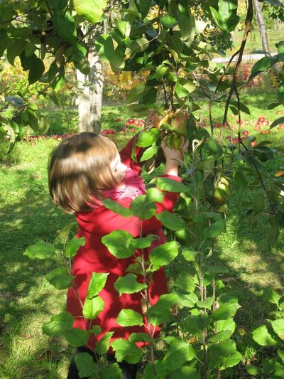 Ma cueilleuse de pommes. My little apple girl 🍏 One Person Plant Nature Outdoors Beauty In Nature apple time Real People Garden child Childhood Leisure Activity One Girl Only In Tree Children Only Best EyeEm Shot Children Photography Child Child In Nature Apple Tree Picking Apples Red Coat Garden Photography Autumn
