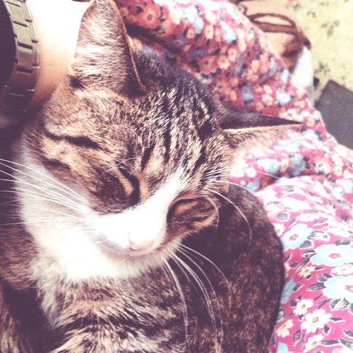 кошка Cat Pussy Citty Cat киска Россия Моя милая.