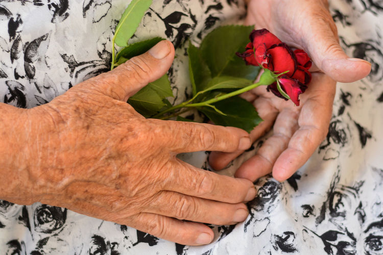 Busy Hands Flower Human Body Part Human Hand Old Hands Rose - Flower Rose🌹 Senior Adult Women Old Hands