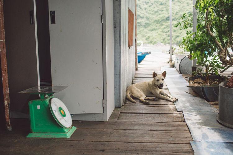 Dog sitting outside house