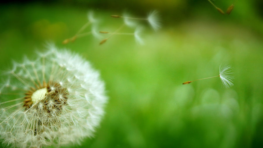 Beauty In Nature Breeze Close-up Dandelion Dandelion Seed Day EyeEmNewHere Flower Flower Head Focus On Foreground Fragility Freshness Grass Green Color Growth Nature No People Outdoors Plant Wind EyeEmNewHere Summer Exploratorium