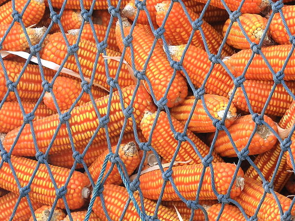 Backgrounds Close-up Corn Corns Day Food Food And Drink Freshness Full Frame Healthy Eating Net No People Orange Color Outdoors