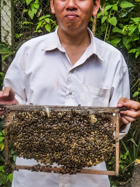 Break The Mold Beehive APIculture Bee Honeycomb Large Group Of Animals Insect Day Outdoors Front View One Person Real People Men Nature People