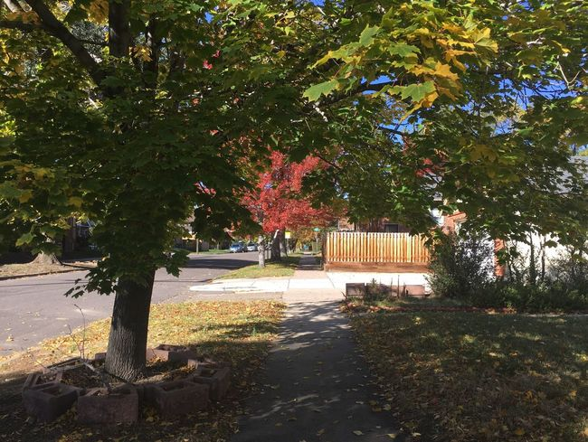 Fall Beauty Fall Colors Day Fall Fall Leaves No People Outdoors Street Tree