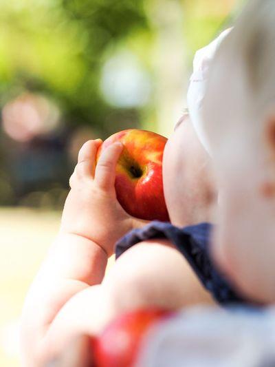 Close-up of boy holding apple