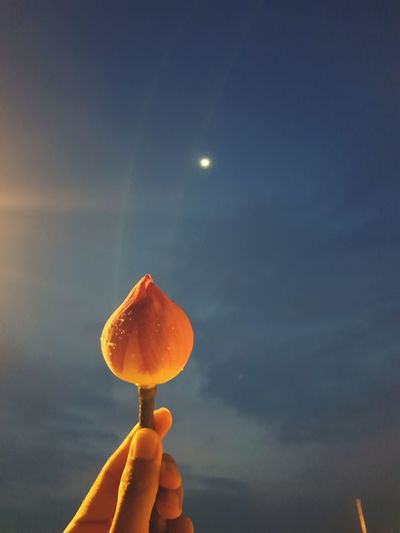 Cropped hand holding flower against sky at night