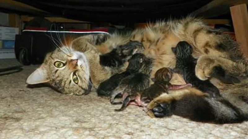 Love My Cat Adorable Animal Lover Cute Pets Kittens Mommy & Baby Time <3 Feeding Animals Urban Spring Fever EyeEmNewHere
