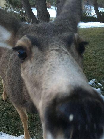 Colorado Life Wild Life Deer