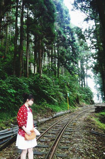 RePicture Travel Taiwan Ali Mountain (in Taiwan Province)