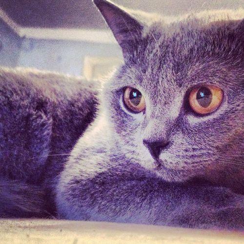 "Cats Spb метро ""нарвская"""