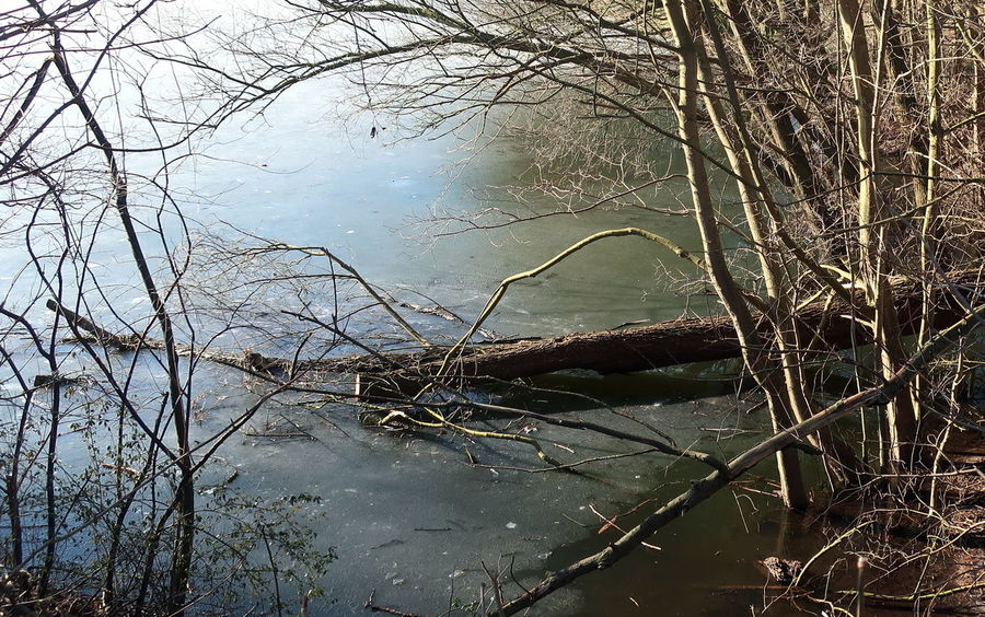 Frost Bare Tree Beauty In Nature Branch Cold Temperature Day Dead Tree Forest Frozen Lake, Lake Nature No People Outdoors Reflection Scenics Sky Standing Water Tranquil Scene Tranquility Tree Water Waterfront