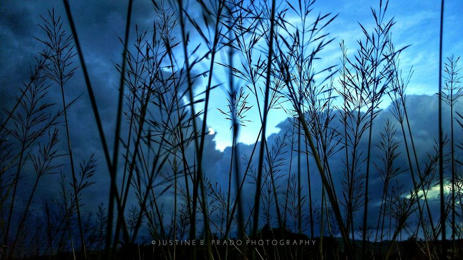 Blue gloom Silhouette Tranquility Eyeem Philippines Mobile Photography Kata I3s Nature