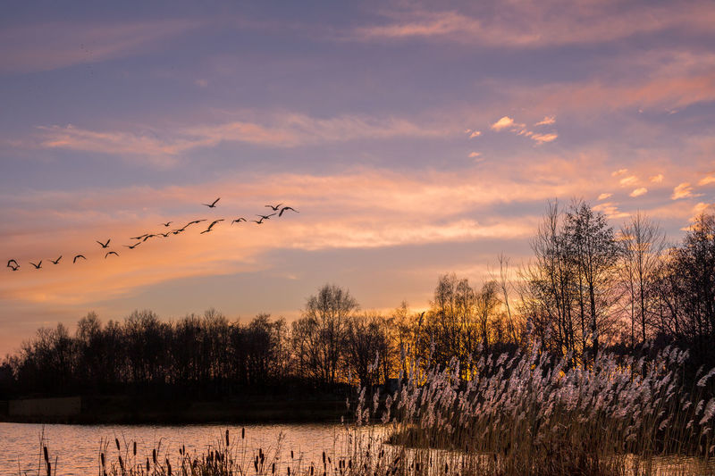 Beauty In Nature Birds Cloud - Sky Lake No People Outdoors Sunset Tranquil Scene Tree