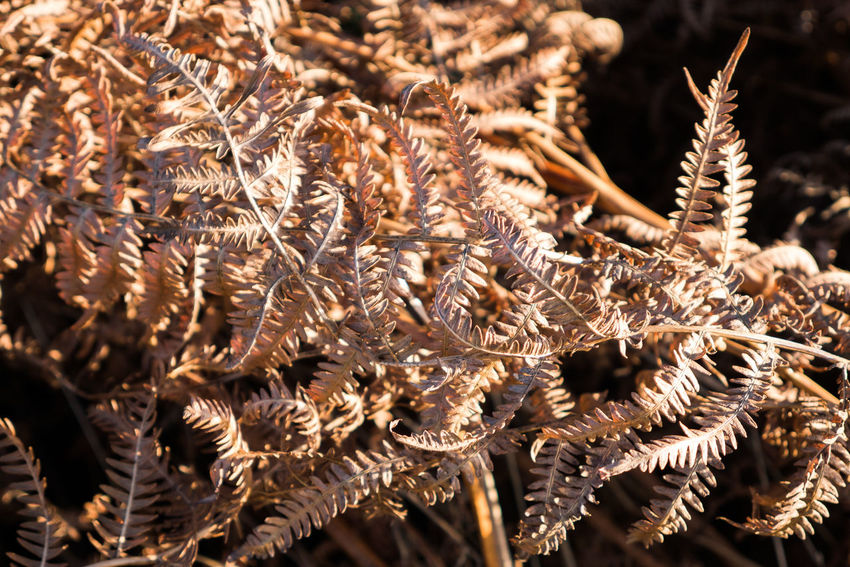 Bracken British Countryside Dried Ferns Light And Shadow Nature Sunlight Winter